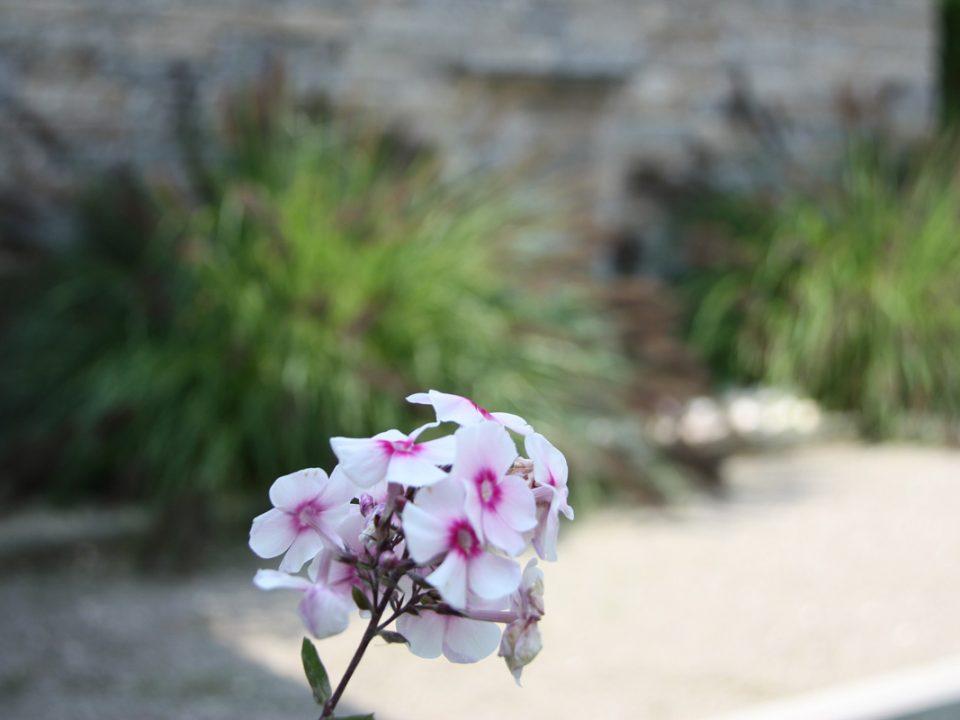 Designgarten | Feuerblume