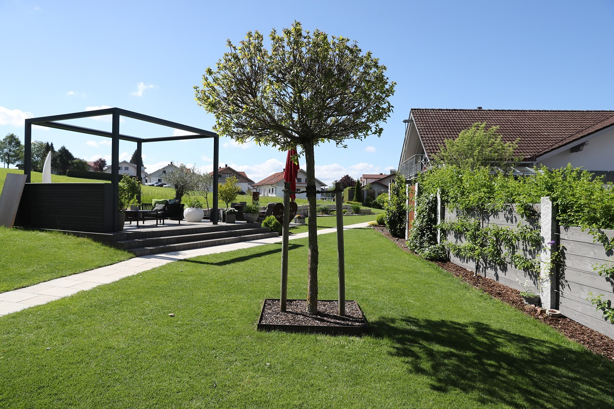 Designgarten | Solitärgehölz