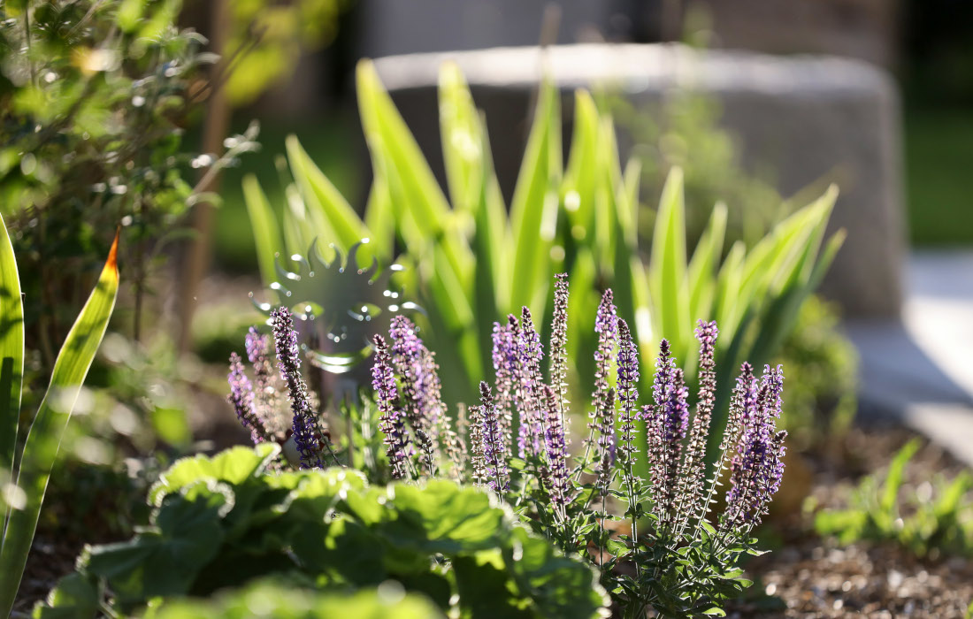 Designgarten Bepflanzung Lavendel